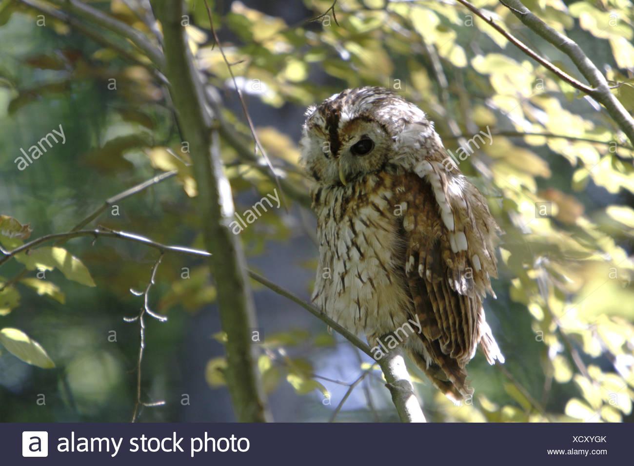 animal bird birds - Stock Image