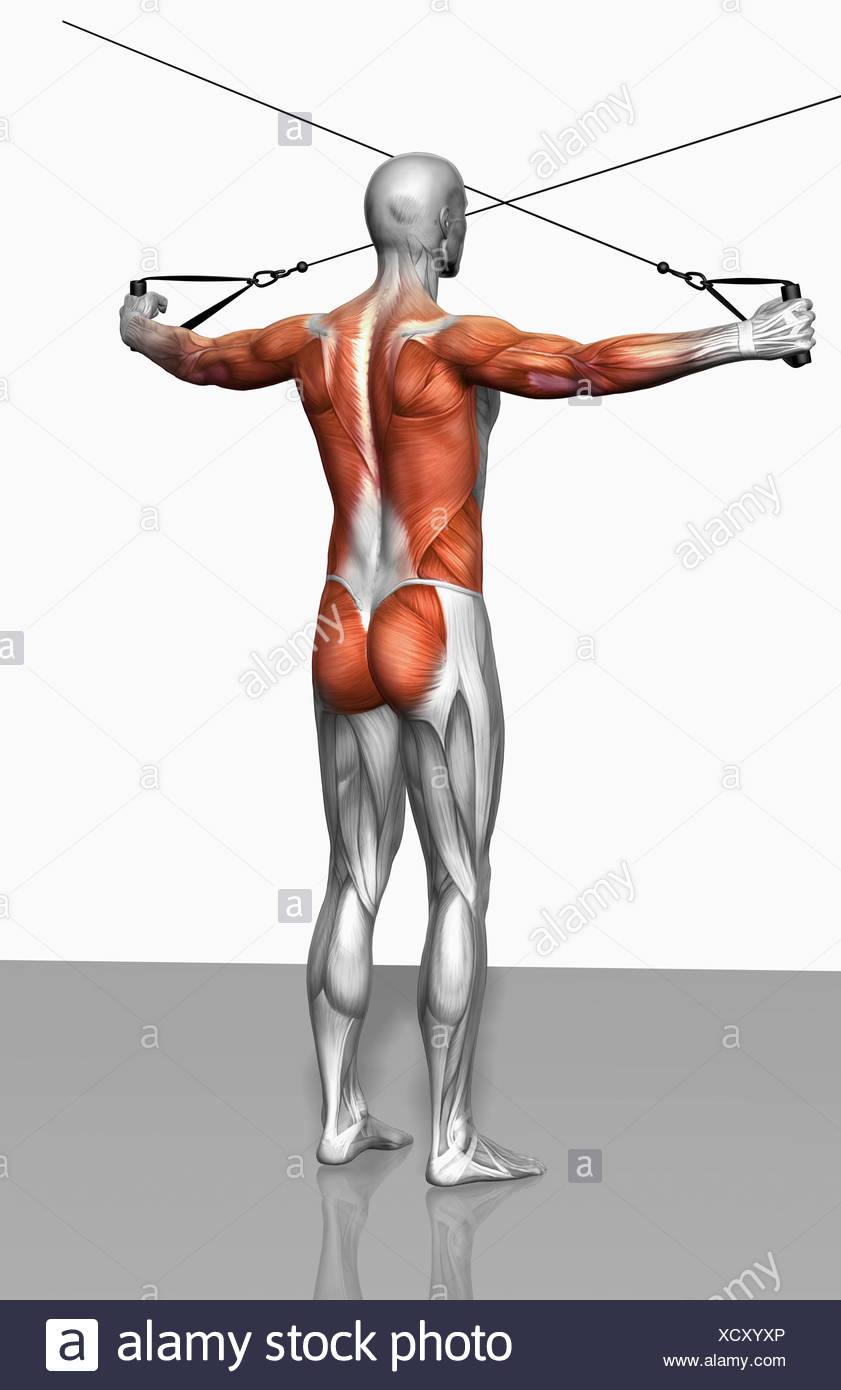 Rear Deltoid Stock Photos & Rear Deltoid Stock Images - Alamy