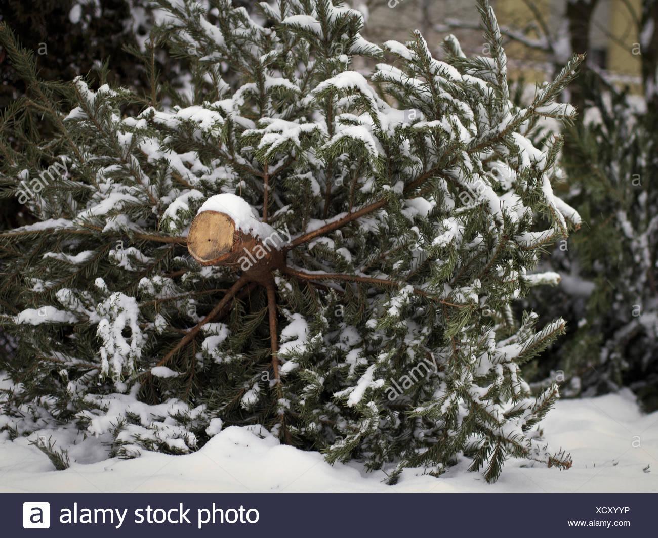 Christmas End Stock Photo
