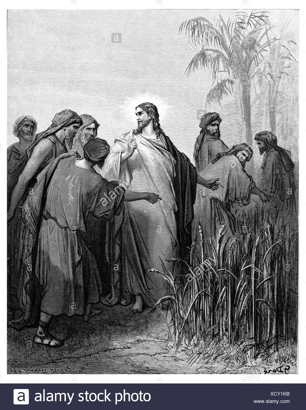 The apostles tear grain on the Sabbath - Stock Image
