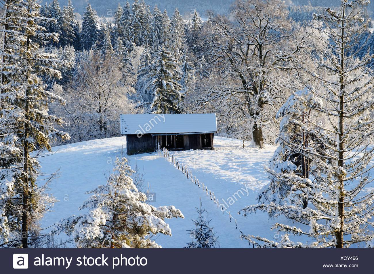 Wintery snow-covered barn at the Aidlinger Hoehe, Murnau, Pfaffenwinkel region, Upper Bavaria, Bavaria - Stock Image
