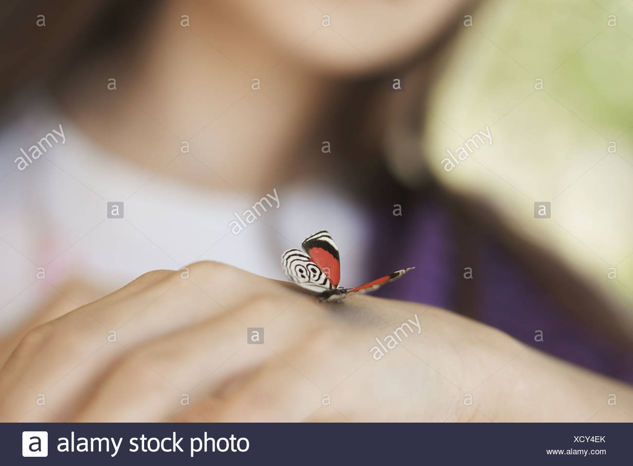 Utah USA child examining butterfly which has landed on hand - Stock Image