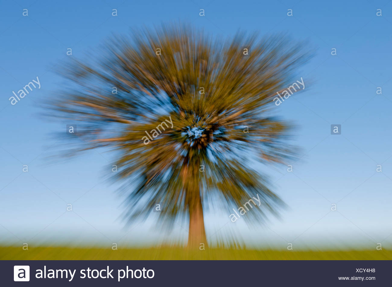 UK, agriculture, autumn, blur, blurred, cliche, effect, England, Europe, explosion, field, isolated, non digital, oak, photograp - Stock Image