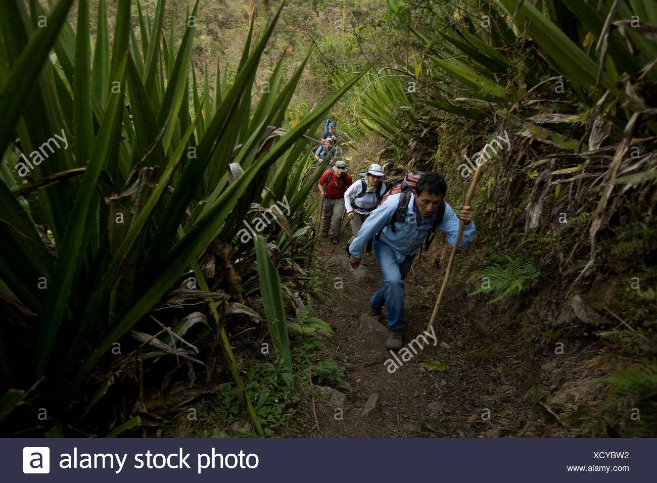 Hiking through lofty tunnels of Spanish moss, orchids, and bromeliads. - Stock Image