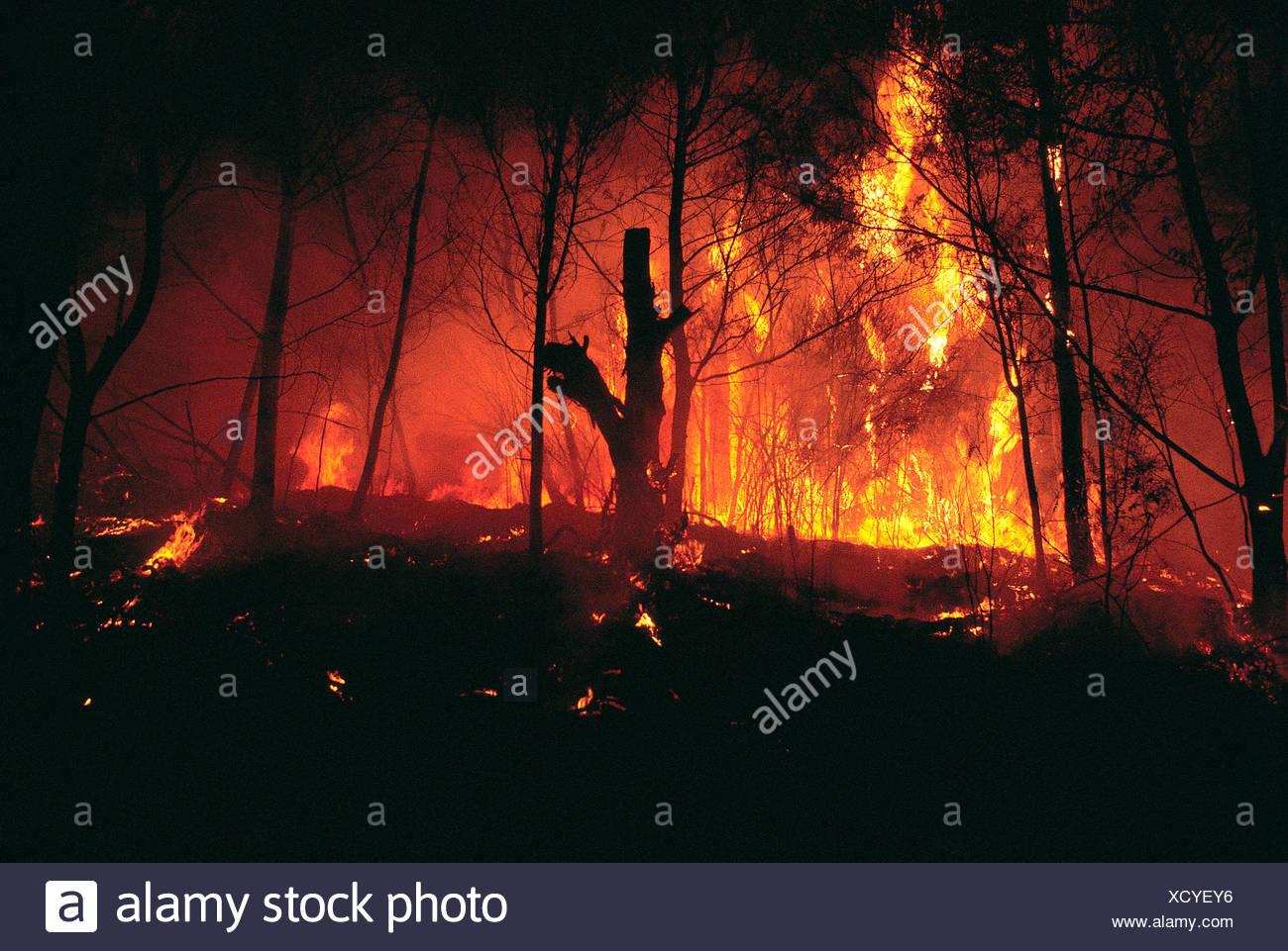 Natural disaster. Bush fire. Australia. - Stock Image