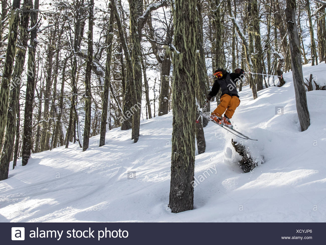 A Skier Airs Off A Snow Covered Stump And Taps A Tree With His Tails In A Forest Around Cerro Catedral In Argentina - Stock Image