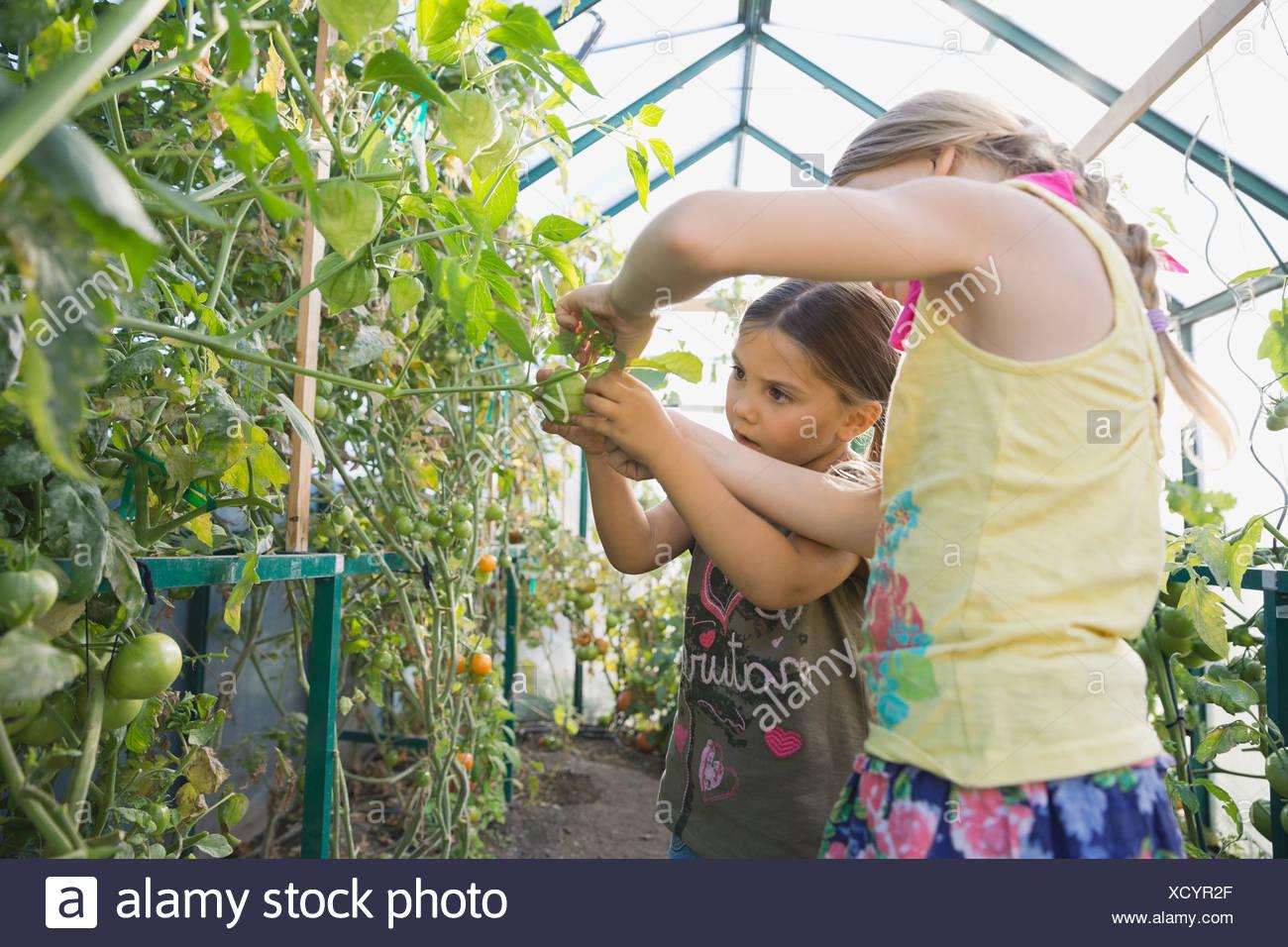 Little girls analyzing flower in community greenhouse - Stock Image