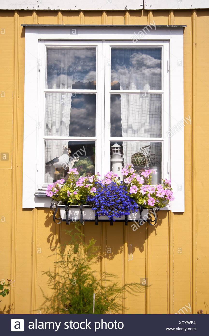 Fenster - Stock Image