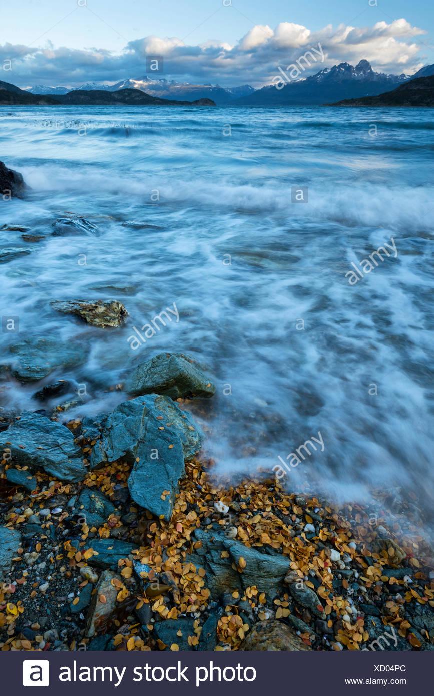 South America,Tierra del Fuego,Argentina,Ushuaia,Tierra del Fuego,National Park,inlet,sea,beach,wild,nature,landscape - Stock Image