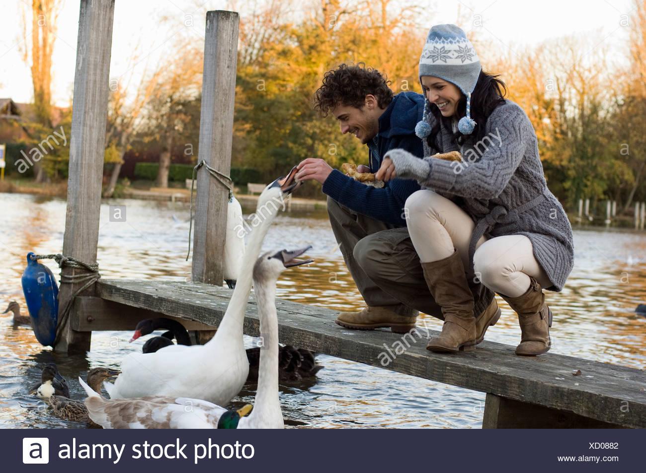 Couple feeding swans Stock Photo