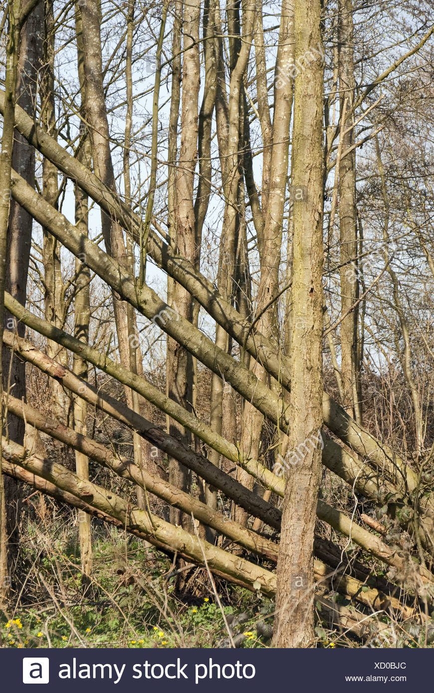 overturned trees - Stock Image