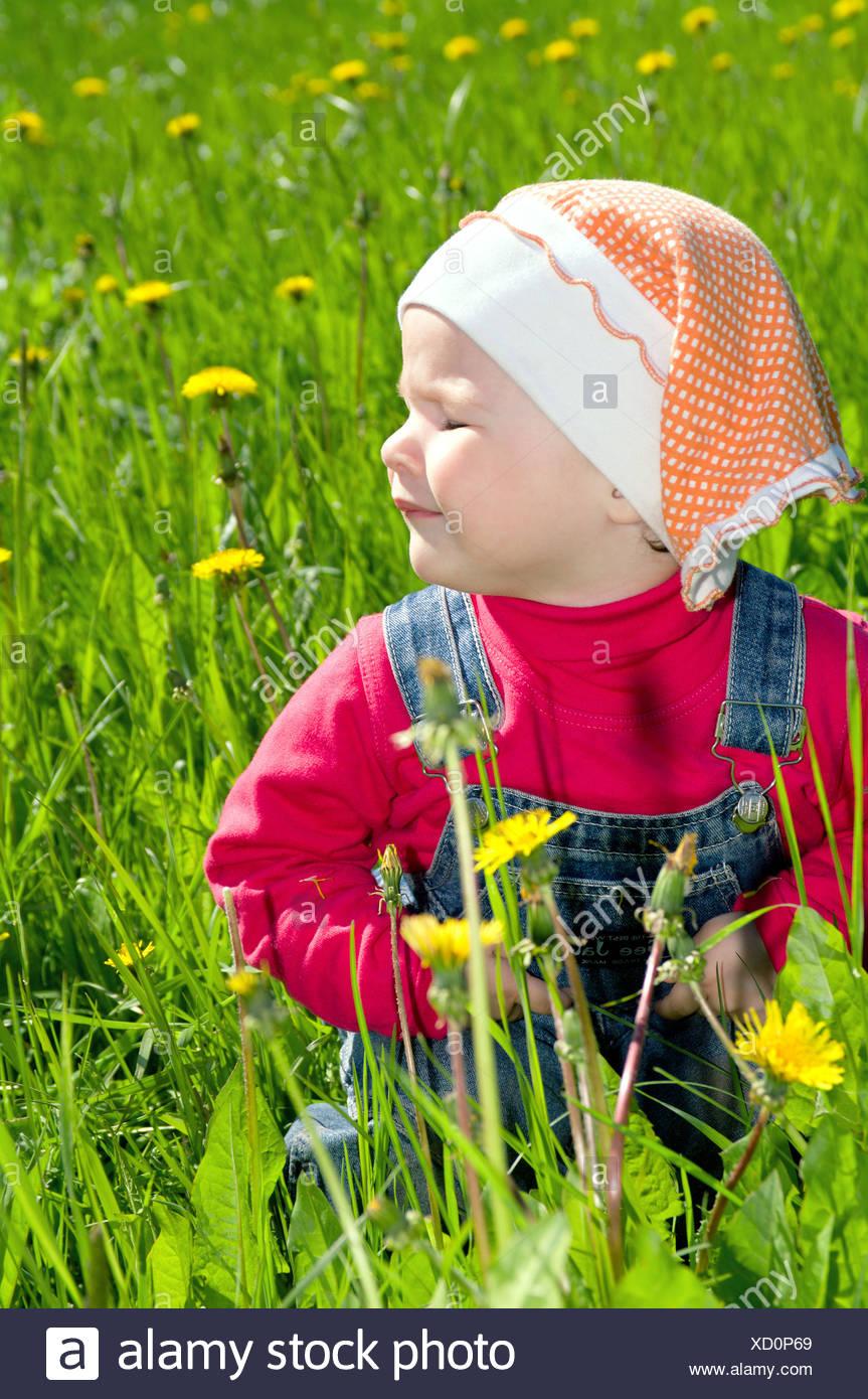 little one on meadow considers dandelion - Stock Image