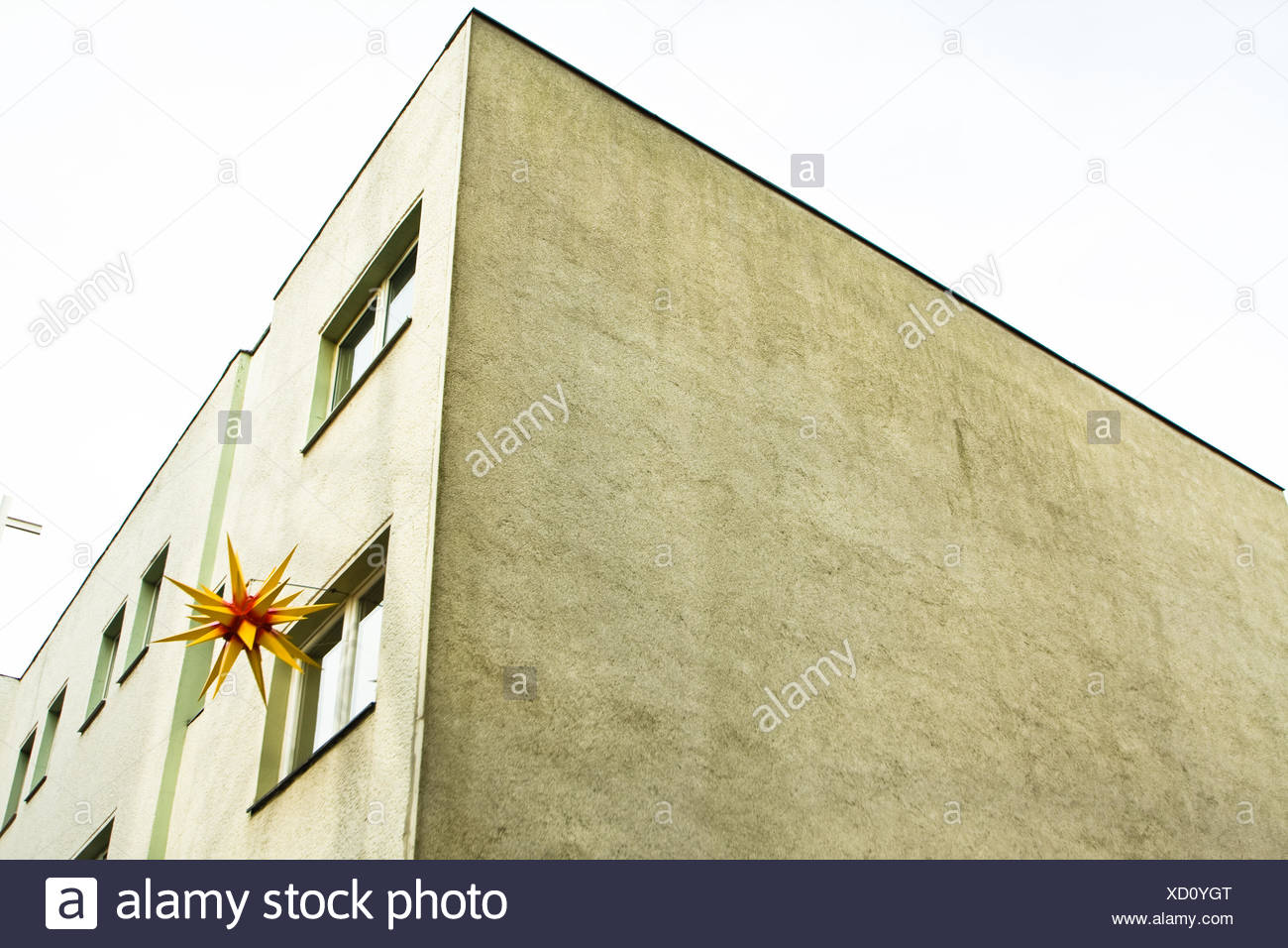 Poinsettia - Stock Image