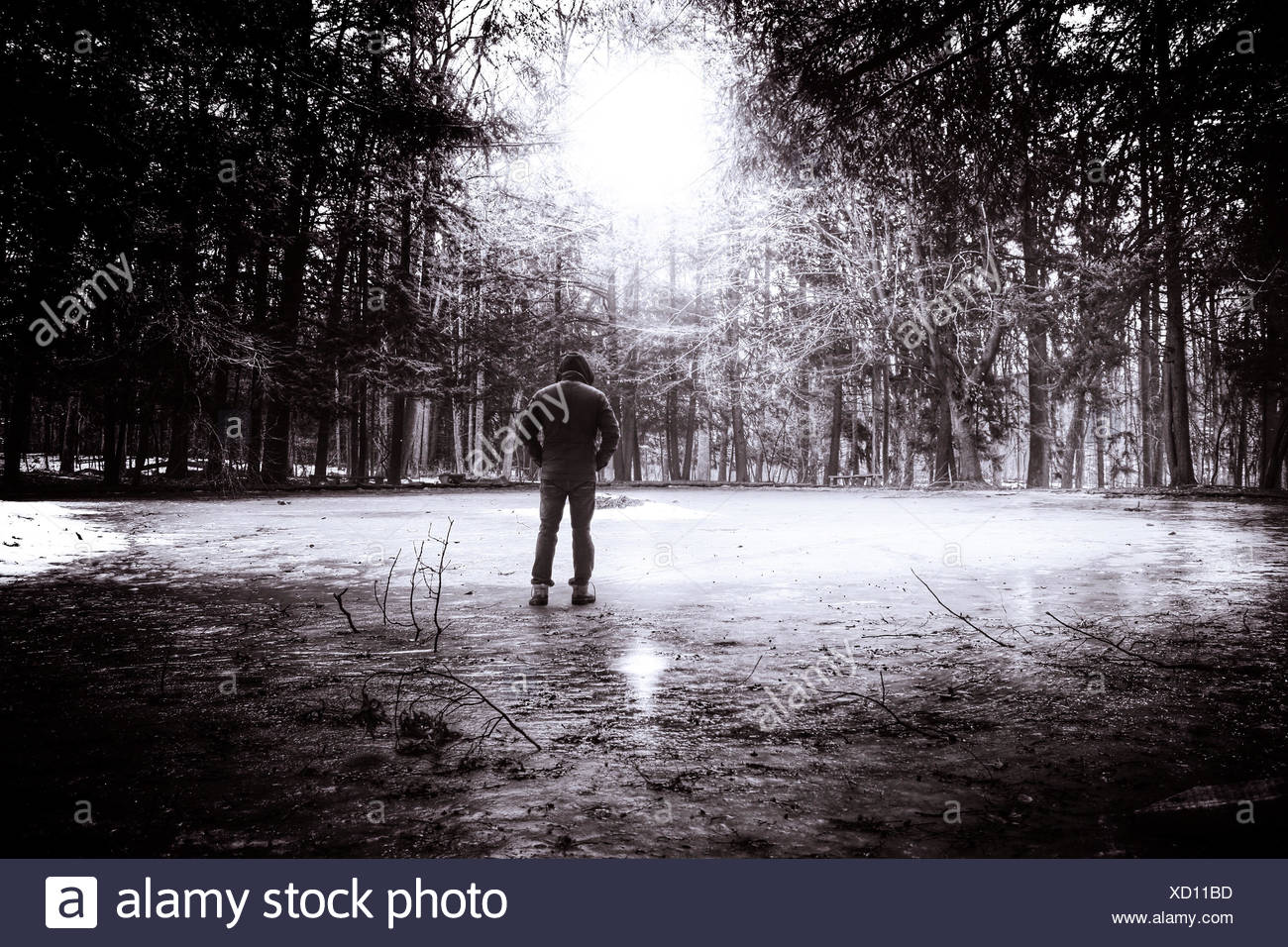 Young man in hooded shirt standing in park, Rear view - Stock Image