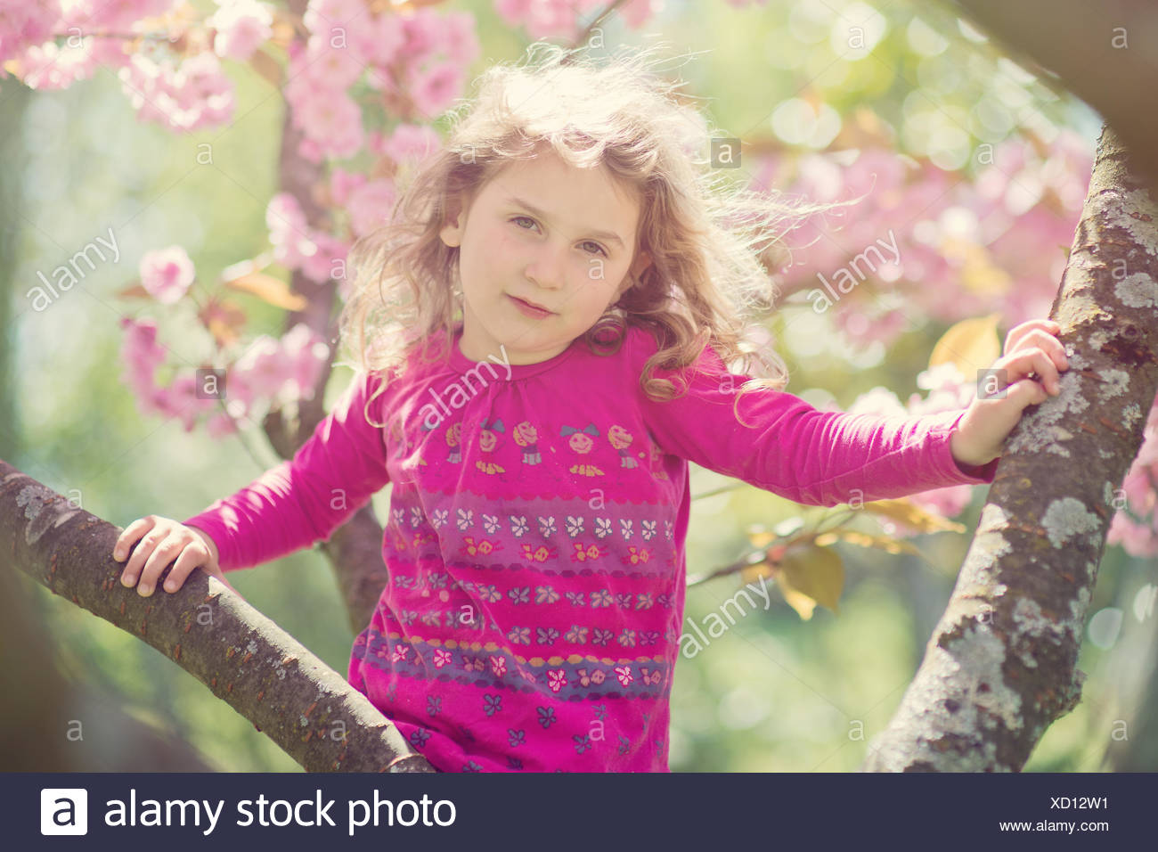 Young girl on the cherry blossom tree - Stock Image