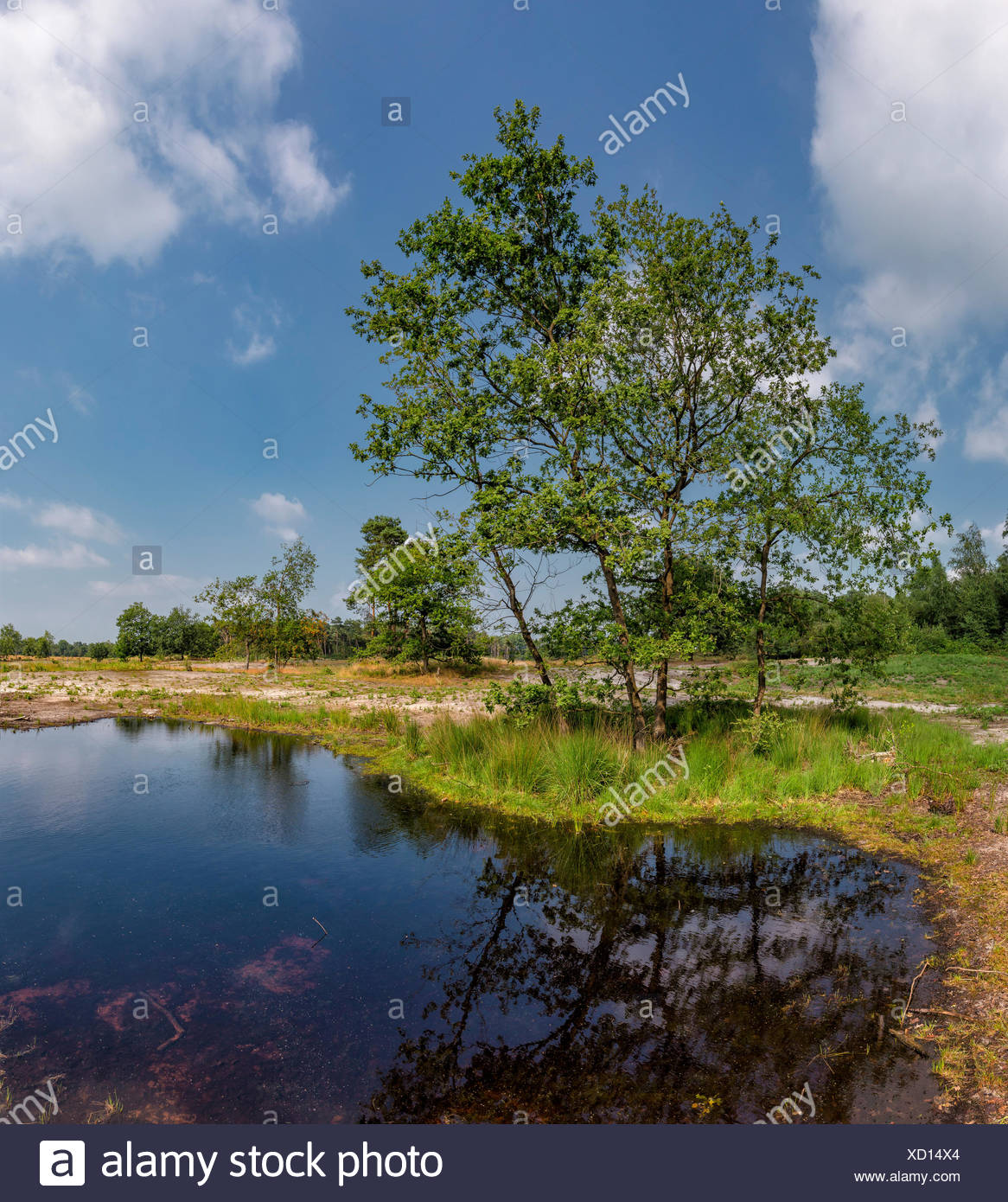Overasselt,Gelderland,Area of natural beauty,the mere of Overasselt and Hatert - Stock Image