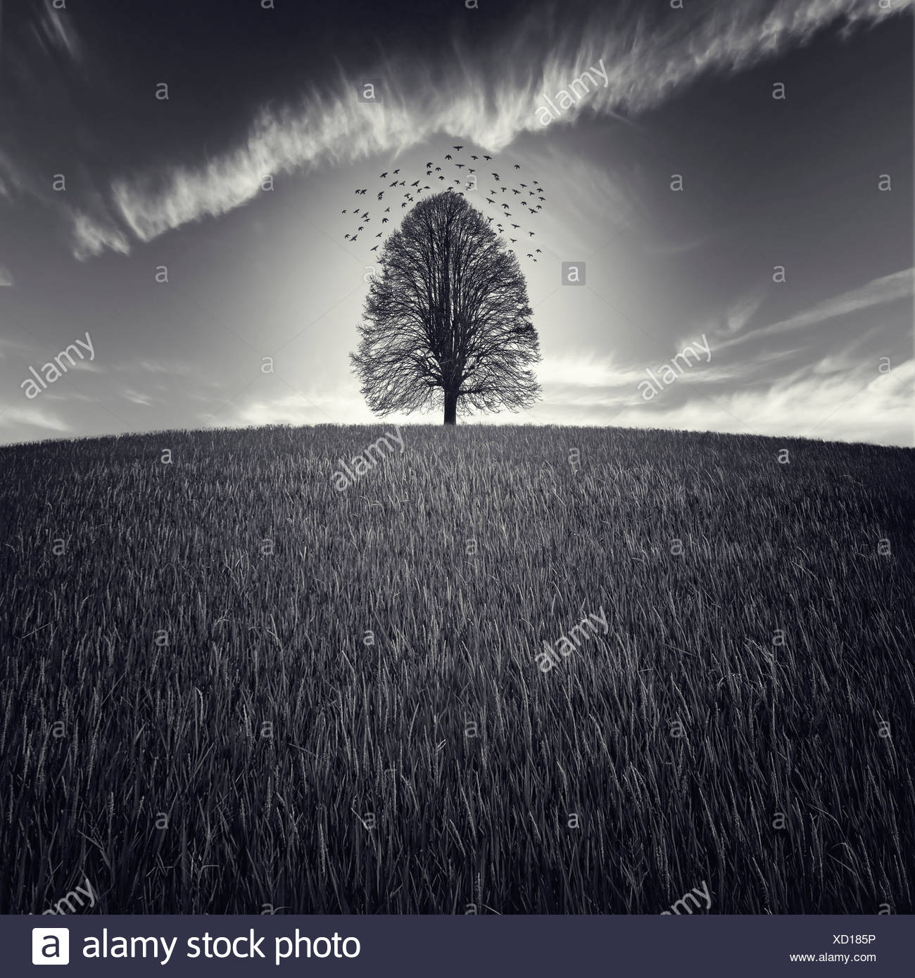 A single tree in a large field with birds flying in the sky - Stock Image