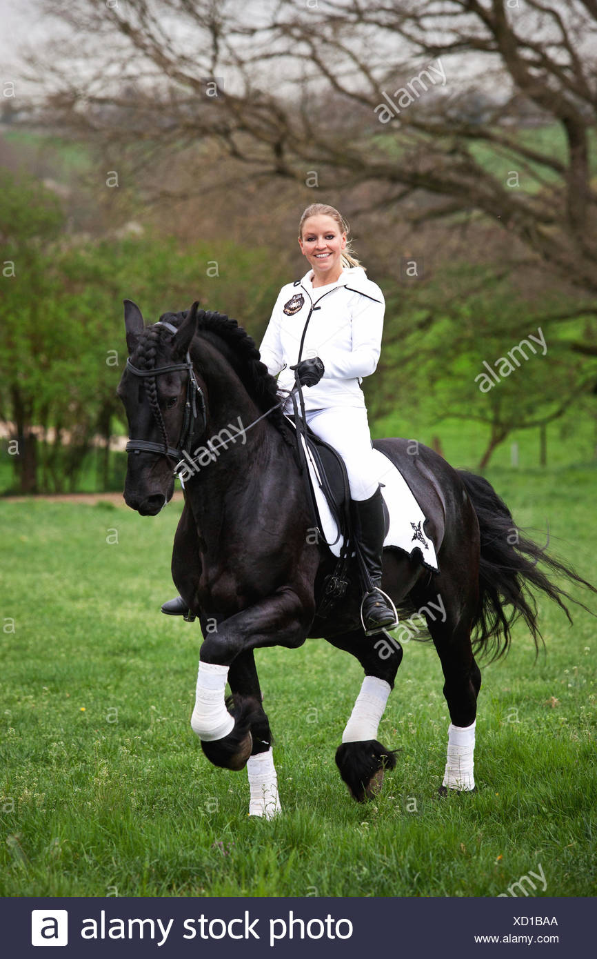 Friesian or Frisian horse, stallion, trotting with female rider on horseback, on a meadow, classical dressage Stock Photo