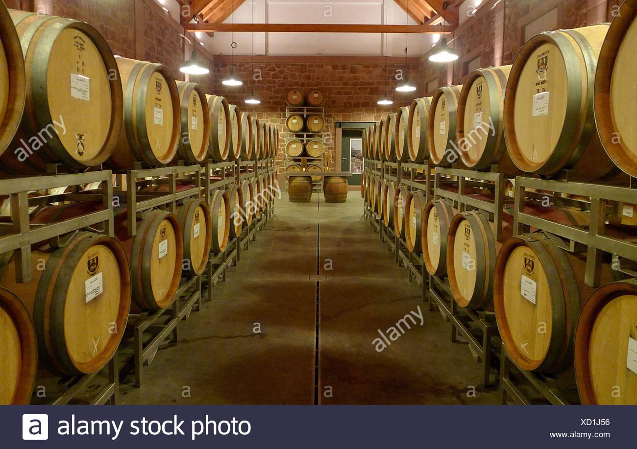 wine casks in a winery, Germany, Rhineland-Palatinate Stock Photo