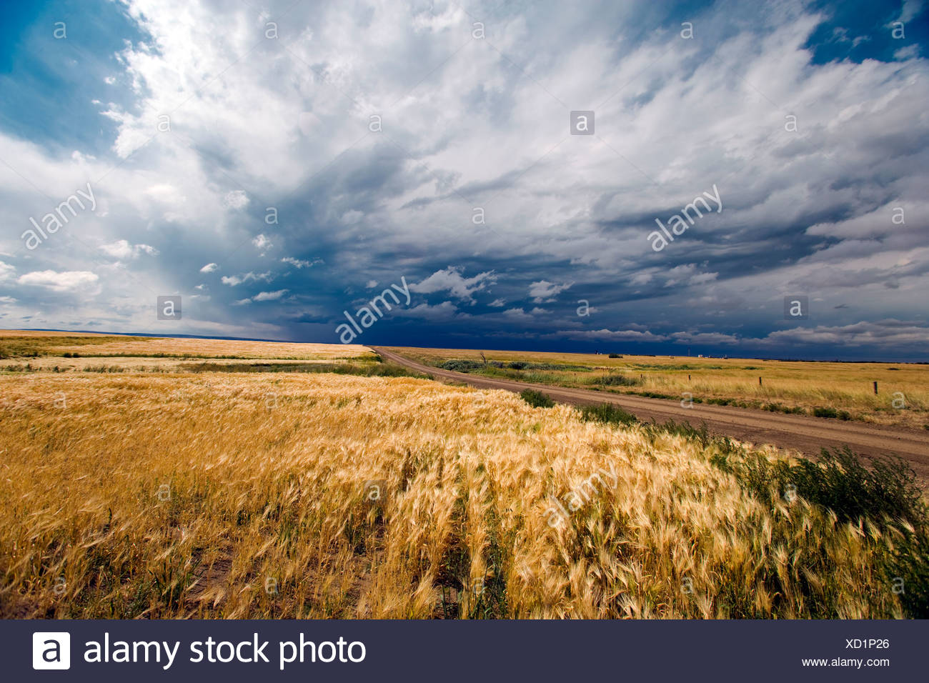 Thunder Storm, Crowfoot Ferry, Alberta, Canada, grain, weather, cloud, agriculture - Stock Image