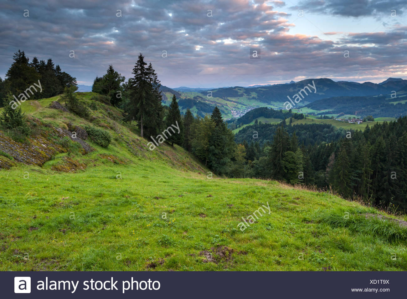 View, Hundwiler Höhe, Hundwil height, Switzerland, Europe, canton, Appenzell, Ausserrhoden, wood, forest, spruces, morning light - Stock Image