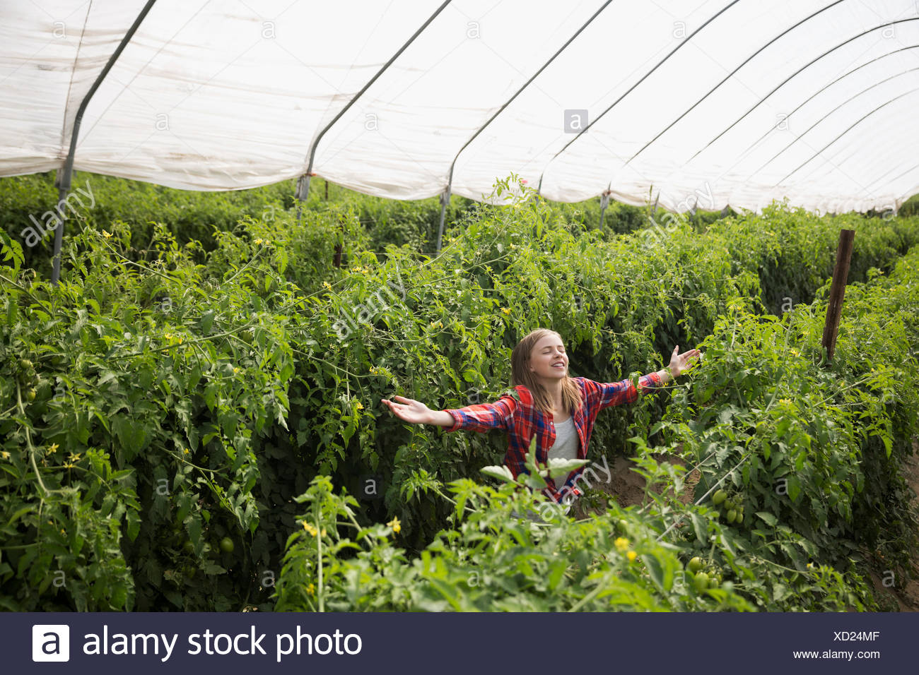 Carefree girl with arms outstretched in greenhouse with tomato plants - Stock Image