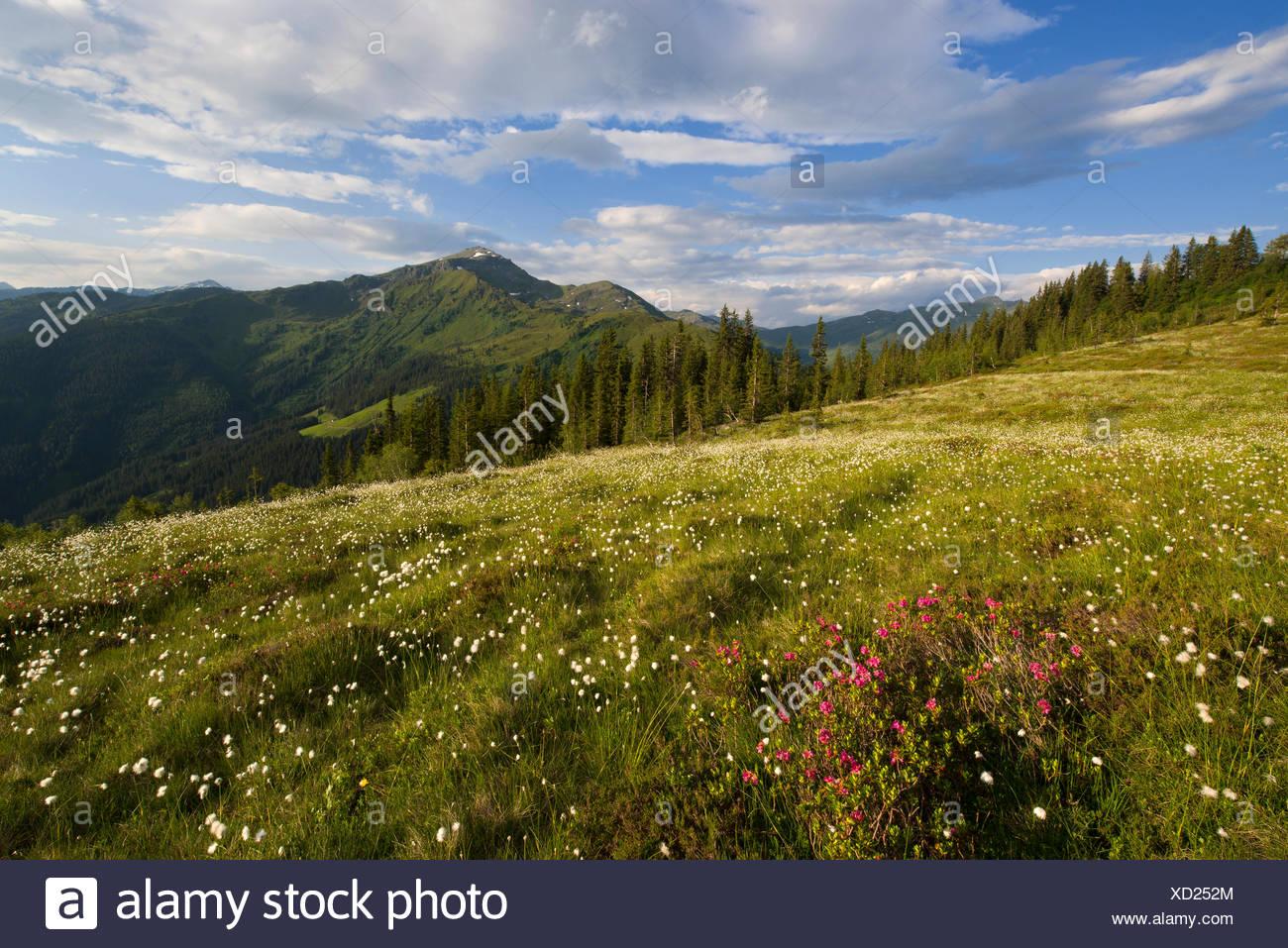Naunz in spring, Naunz, Kellerjoch, Tux Prealps, Tyrol, Austria, Europe - Stock Image