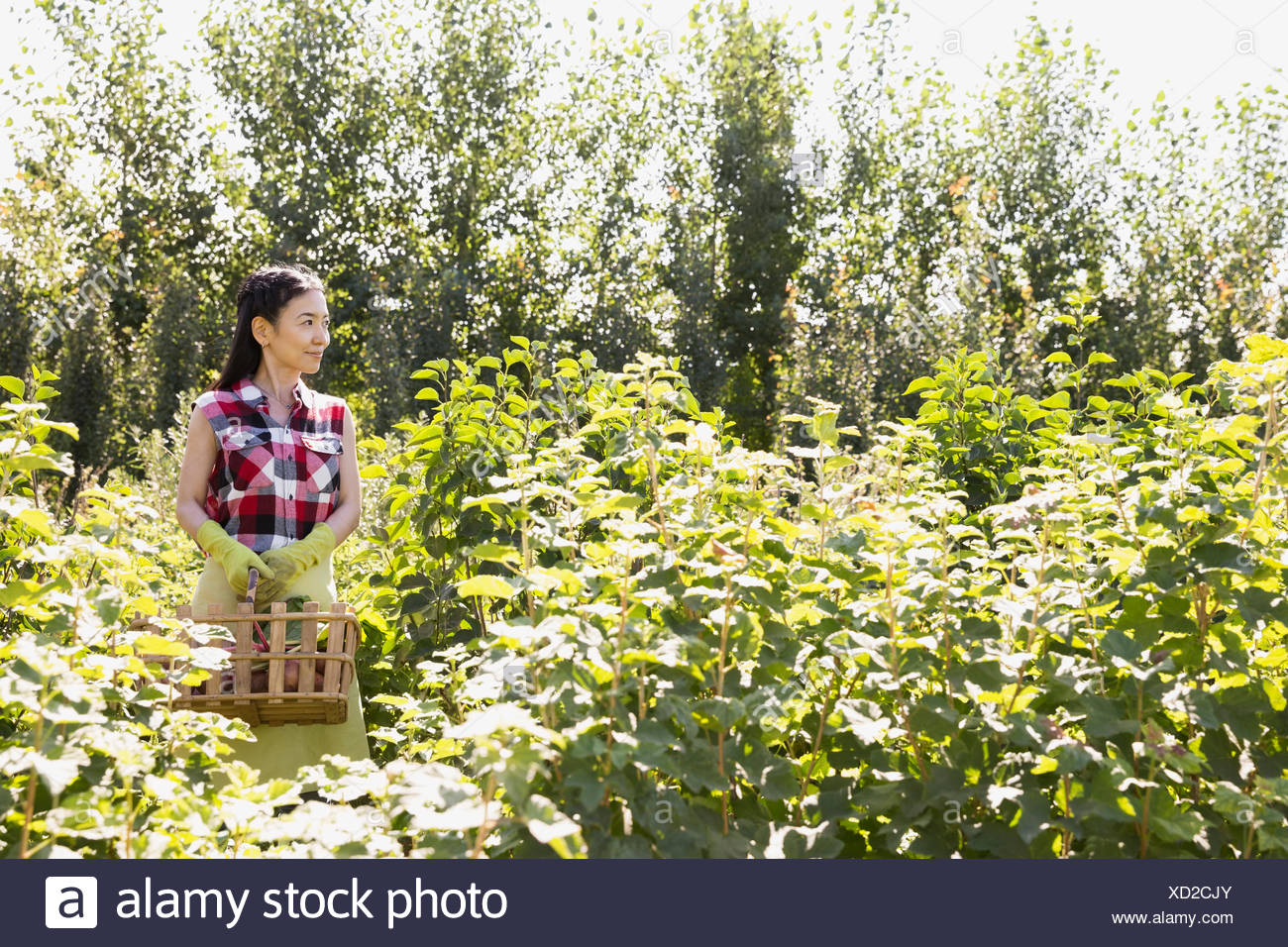 Woman with basket in garden - Stock Image