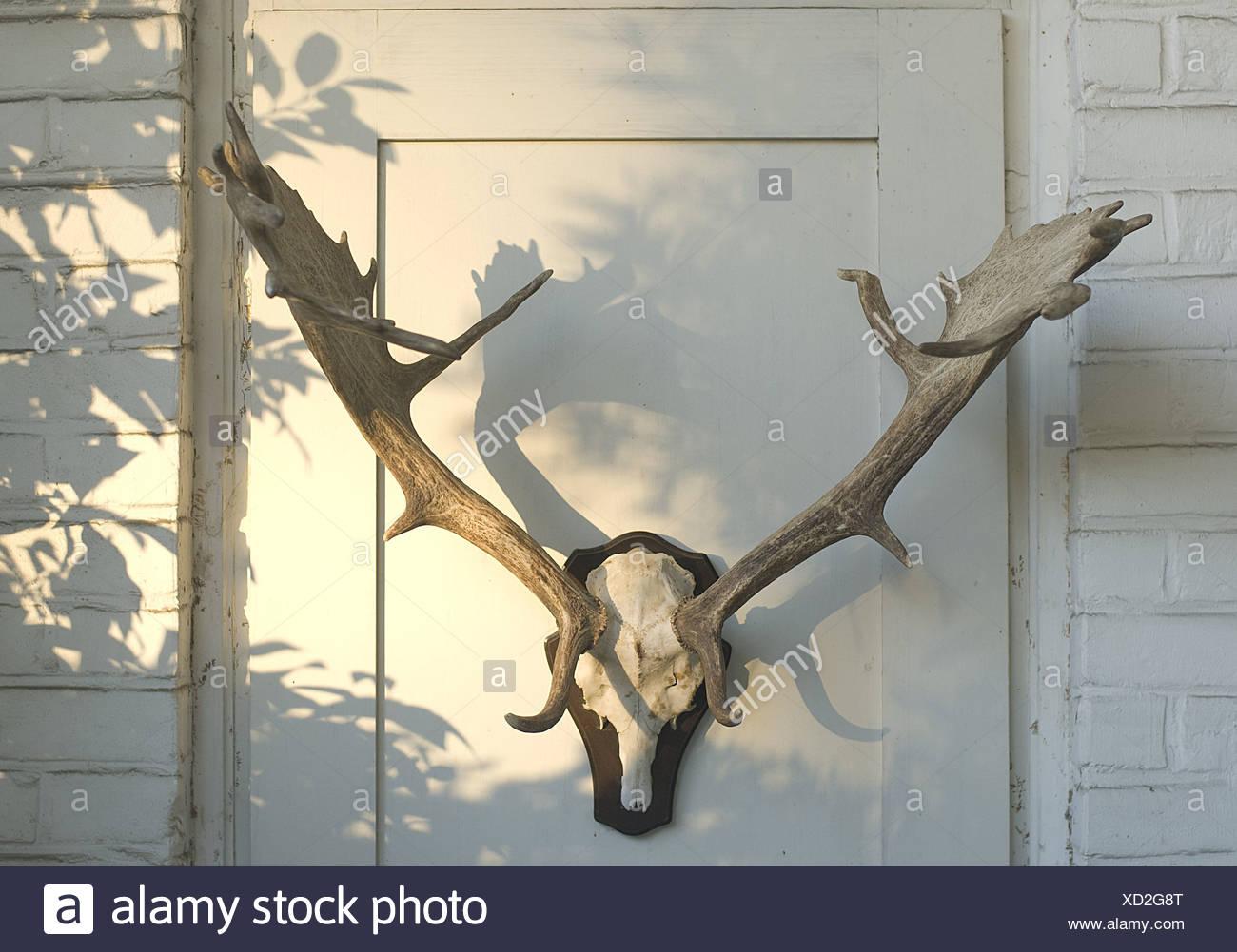 horns - Stock Image