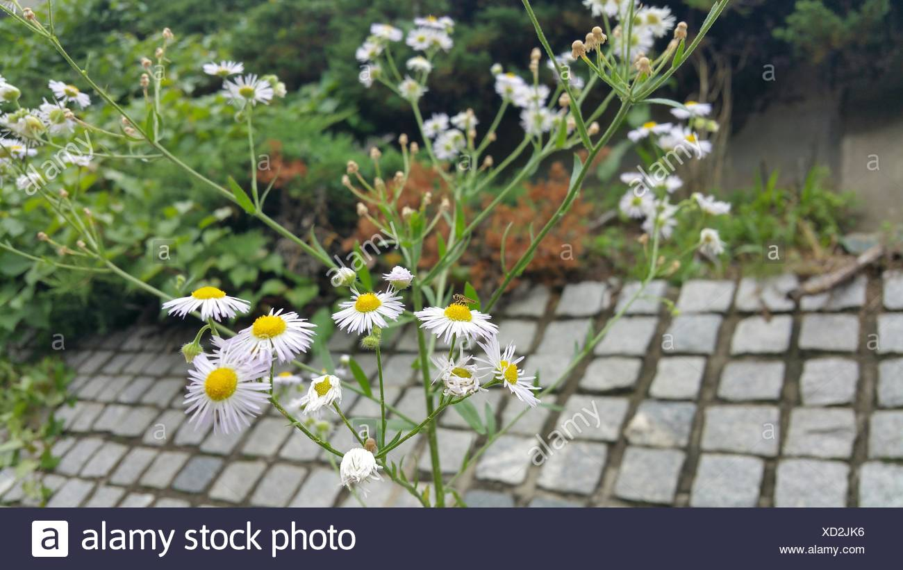 View Of Flowers And Stems - Stock Image