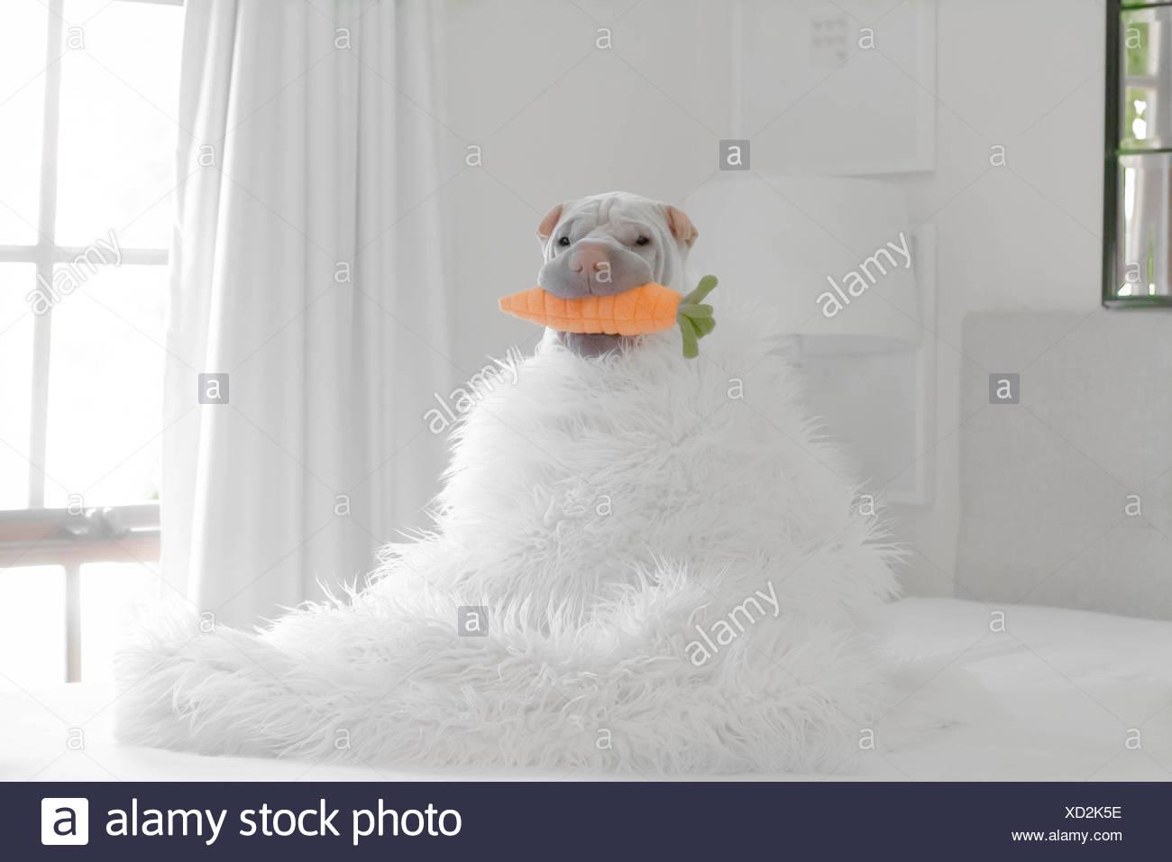 Dog Snowman Stock Photos Amp Dog Snowman Stock Images Alamy