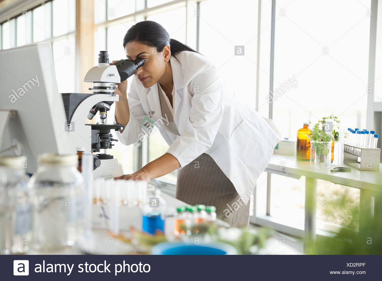 Female botanist looking through microscope - Stock Image