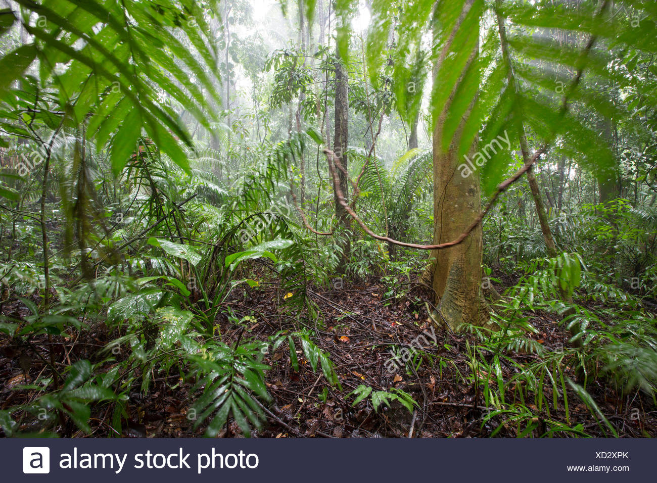 Rainforest on Barro Colorado Island - Gatun Lake Panama - Stock Image