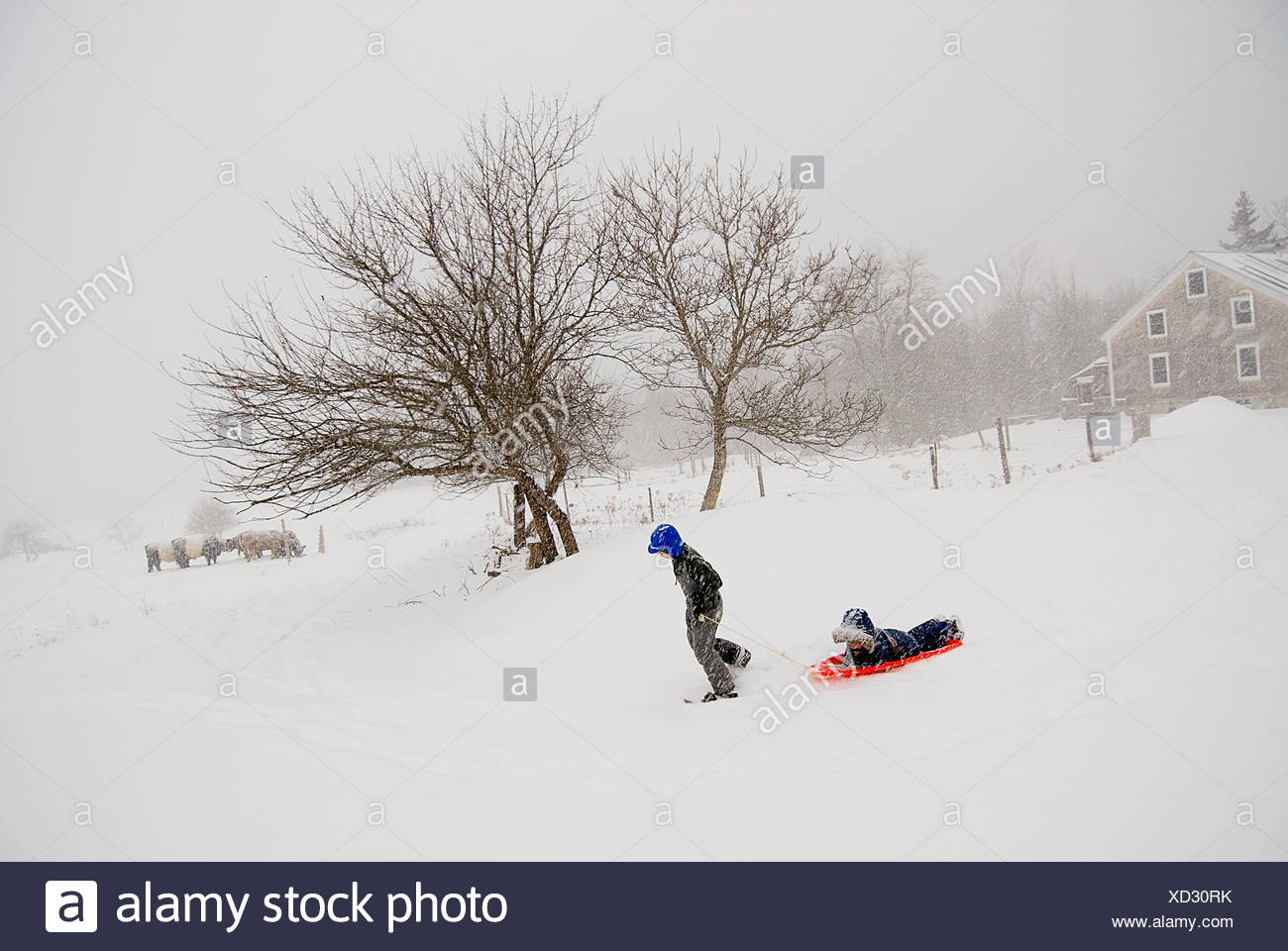 A boy totes his younger brother in a sled across their farm. - Stock Image