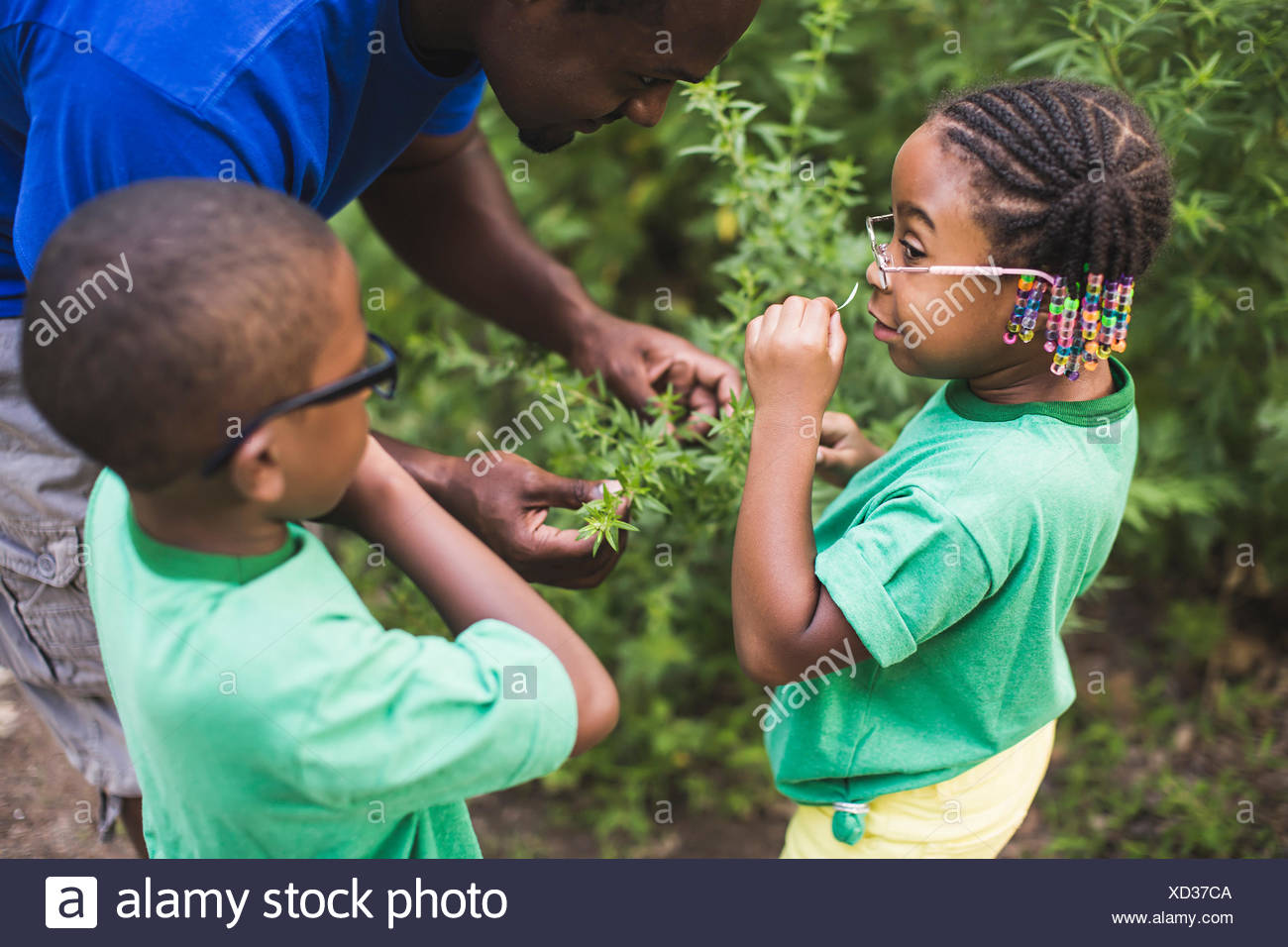 Father smelling plants with son and daughter at forest eco camp - Stock Image