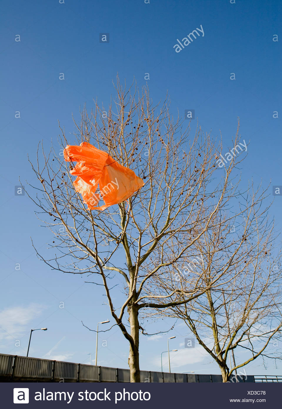 Orange carrier bag in tree - Stock Image