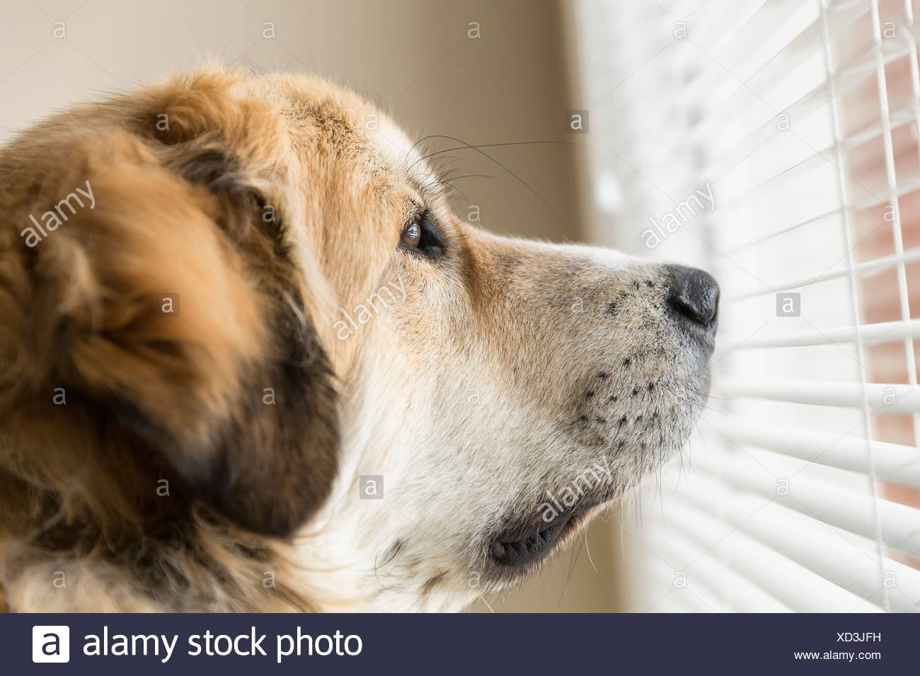 Dog Covering Face Stock Photos Amp Dog Covering Face Stock