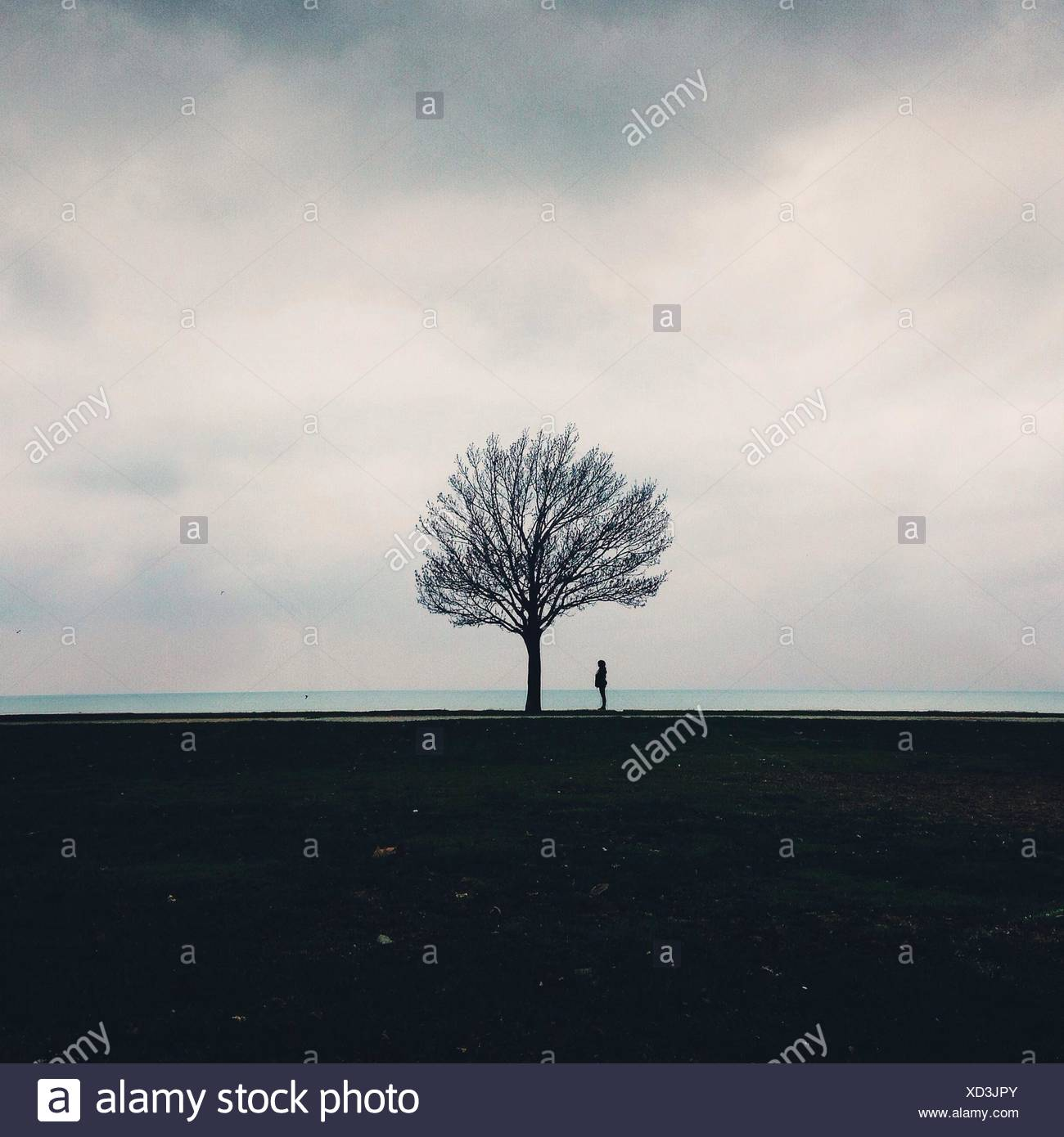 Silhouette Person Standing By Bare Tree On Field By Sea Against Cloudy Sky - Stock Image