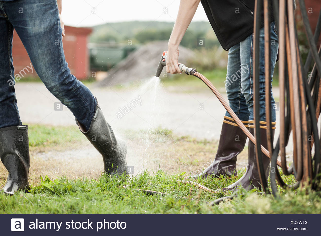 Low section of woman spraying water from hose on man's leg on farm - Stock Image