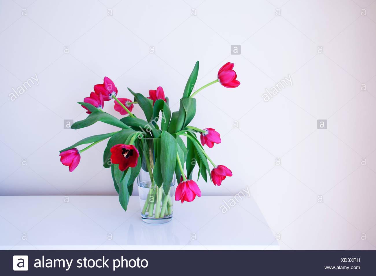 Tulips in glass vase stock photos tulips in glass vase stock pink tulips in glass vase stock image reviewsmspy