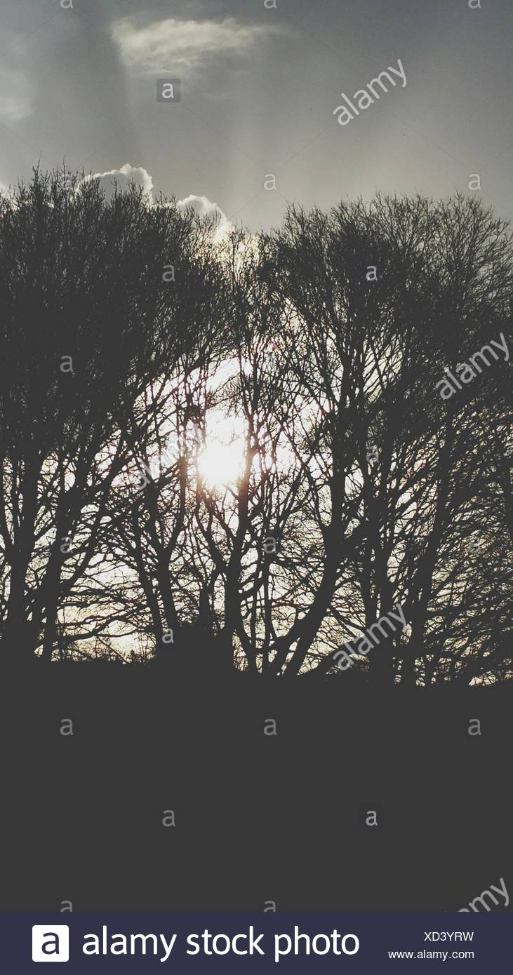 Silhouette Of Bare Trees Against Sky - Stock Image