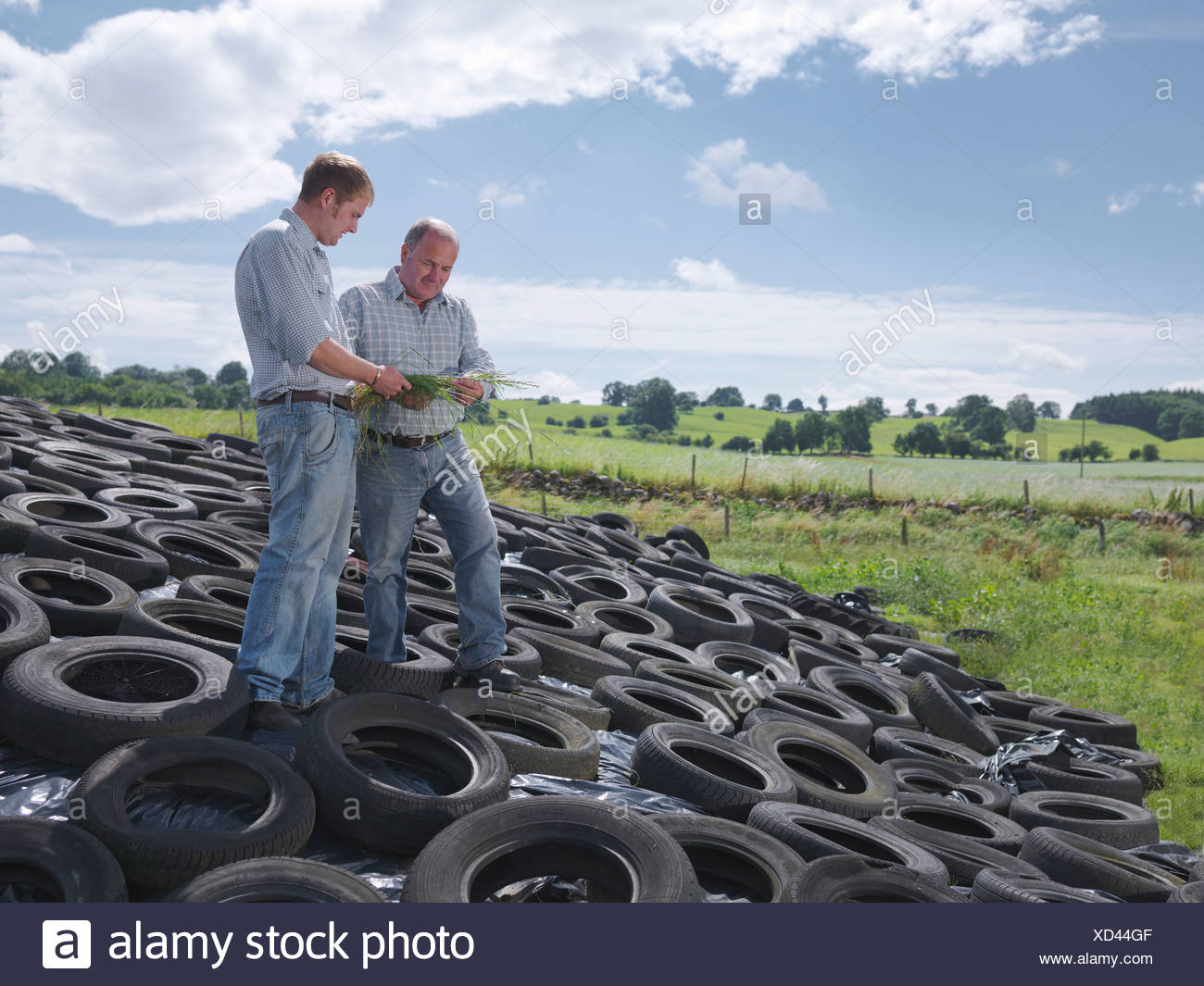 Farmers inspect grass on silage clamp - Stock Image