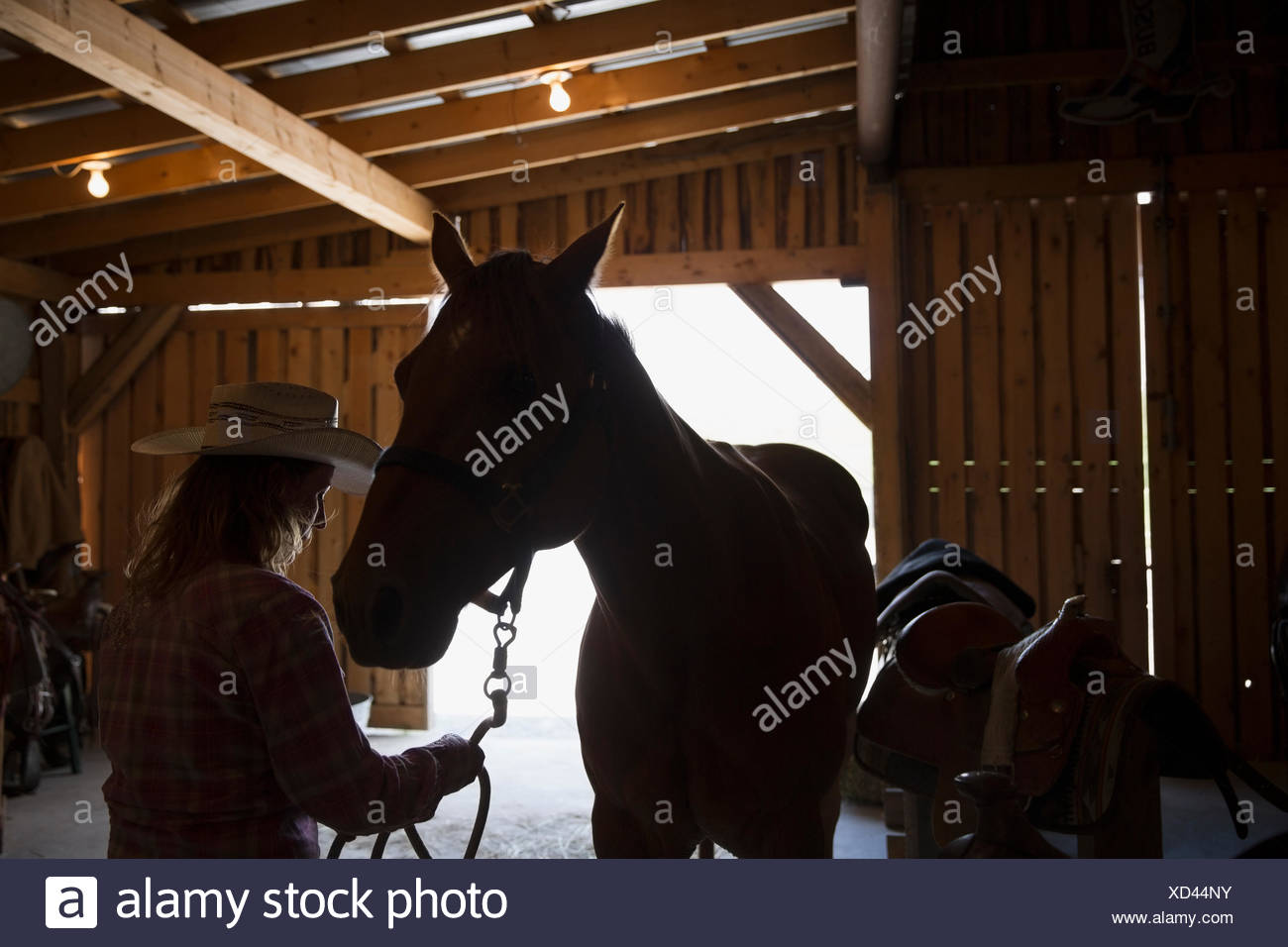 Silhouette of female rancher with horse in stable - Stock Image