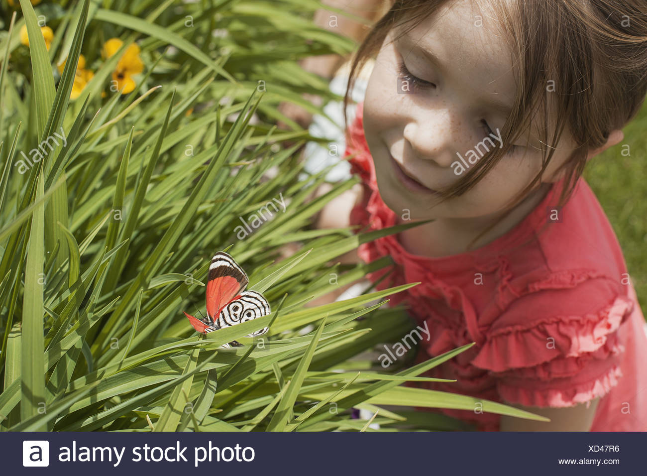 Utah USA young girl looking at colourful butterfly grass - Stock Image