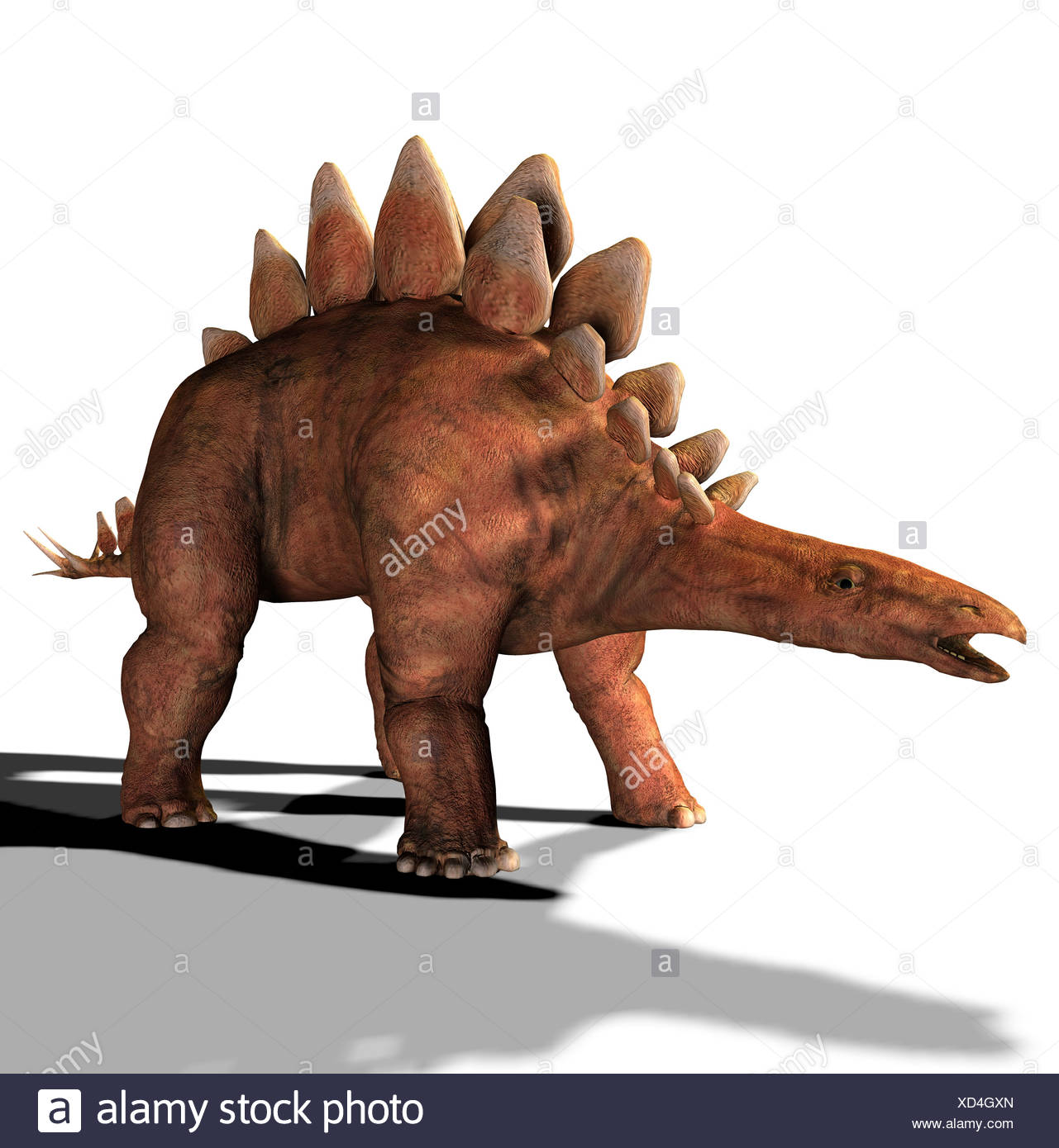 The Stegosaurus is called also plate lizard and in the jurassic period occurred. Its length amounted to approx. 8 m, the heightStock Photo