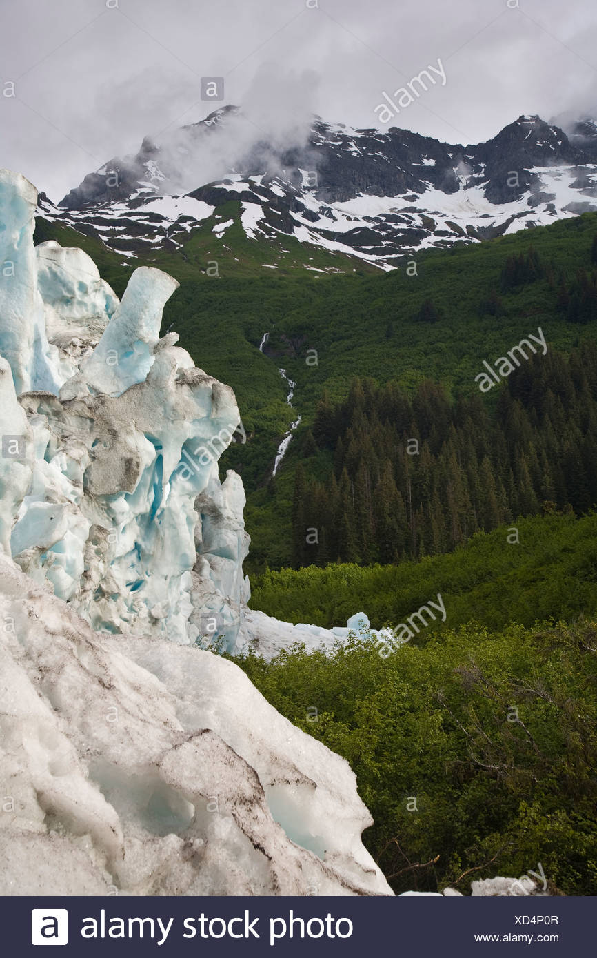 The Meares Glacier, Prince William Sound, Alaska advances into the surrounding old-growth coastal temperate rainforests. - Stock Image