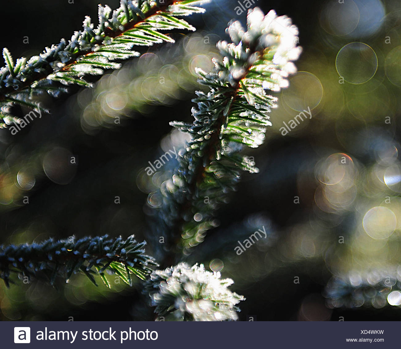 Close-up tree - Stock Image