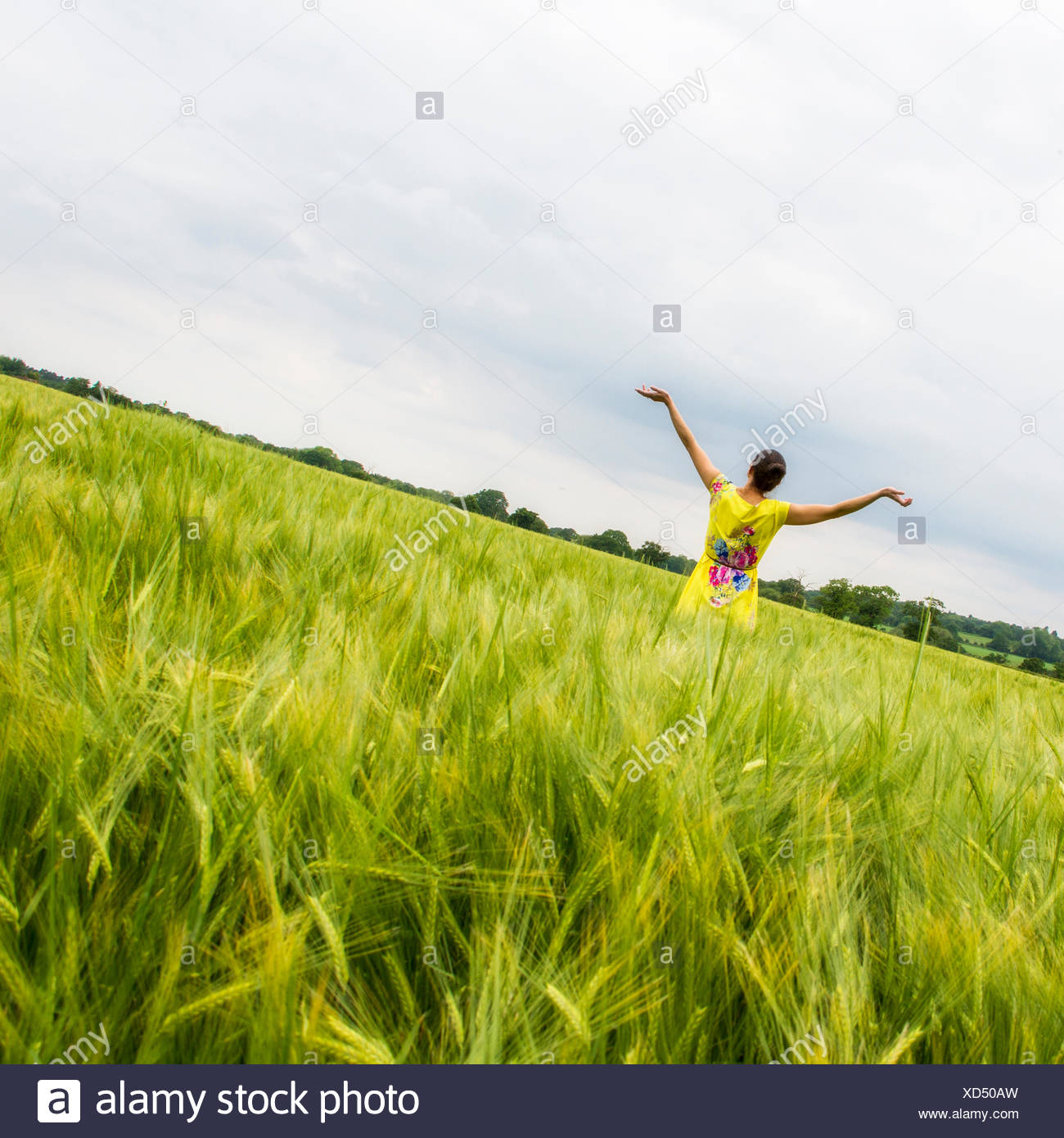 Rear view of woman in field with outstretched arms - Stock Image