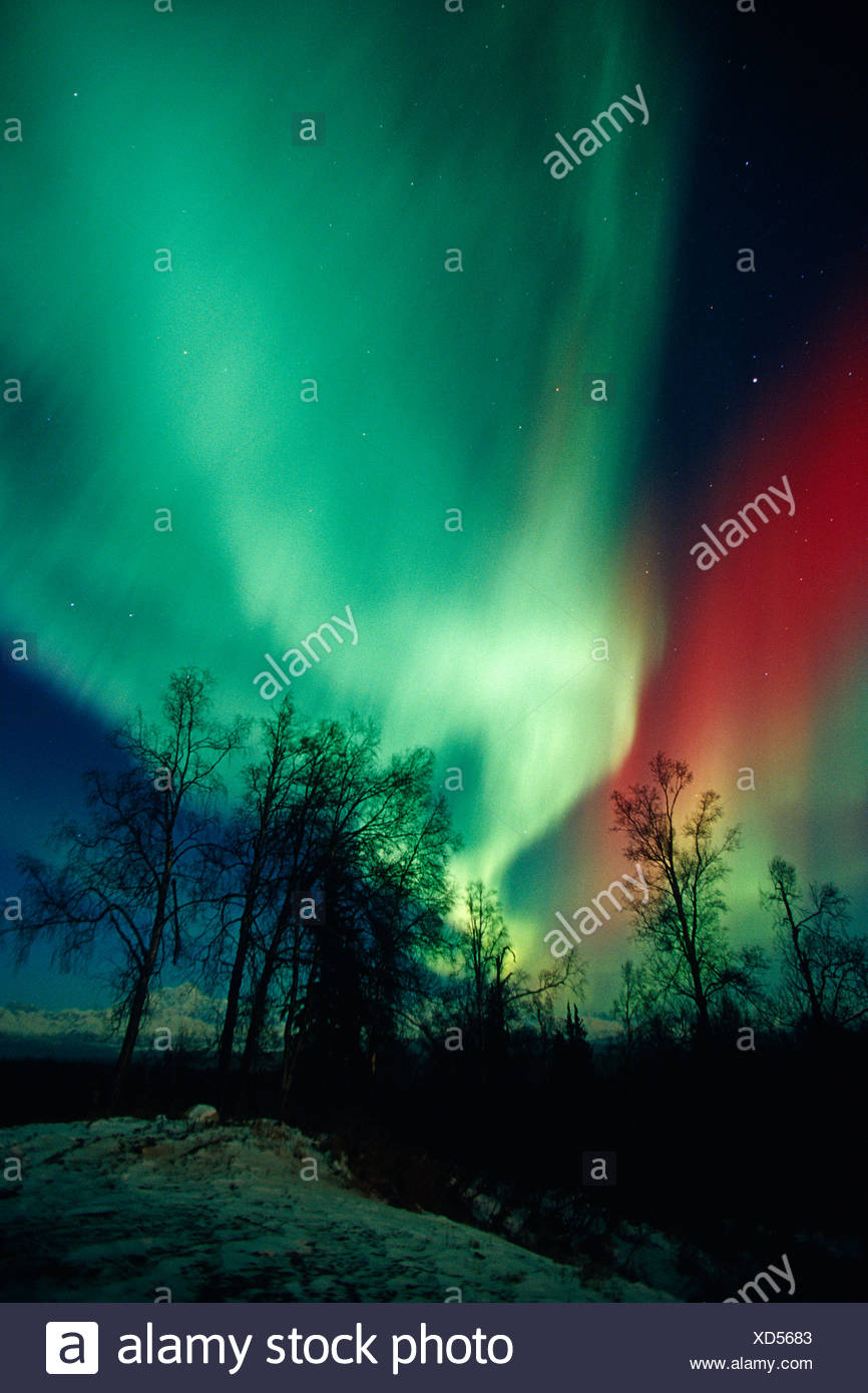 Red & Green Aurora Over Spruce Trees Near Petersville - Stock Image