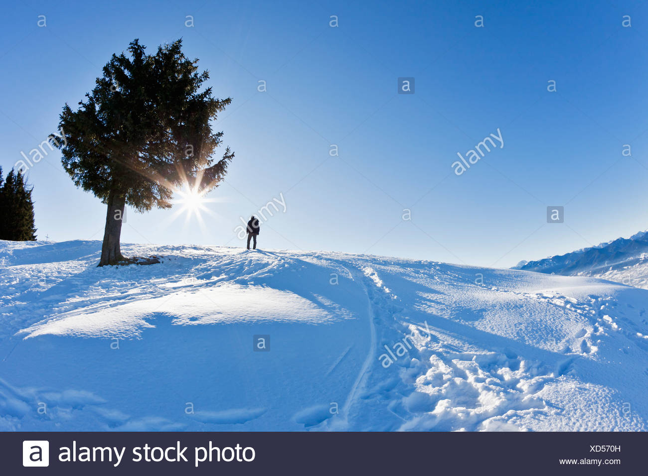 Germany, Bavaria, Blomberg, Man hiking on top of Zwiesel mountain - Stock Image